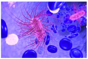 E.-coli.png