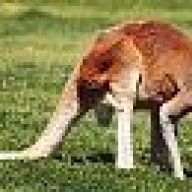 roo tail