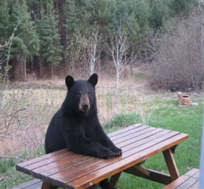 bear table.png