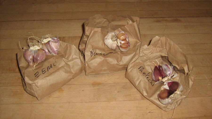 Garlic from Dave - 3 kinds;}- 001 - Copy.JPG